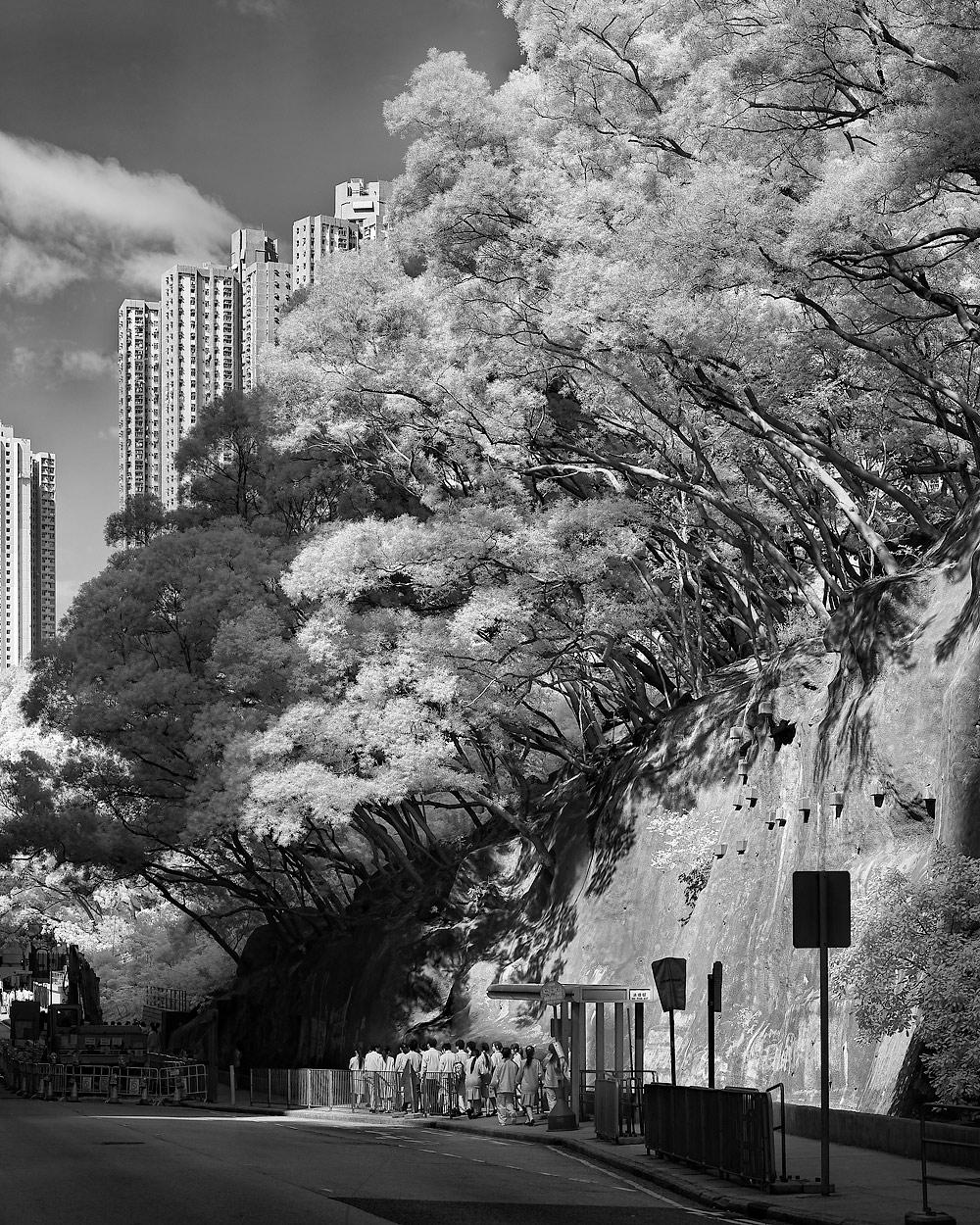 20091127_5637-Panorama