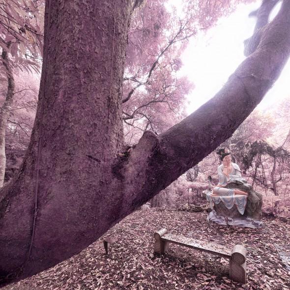 2012-02-16 延慶寺觀音